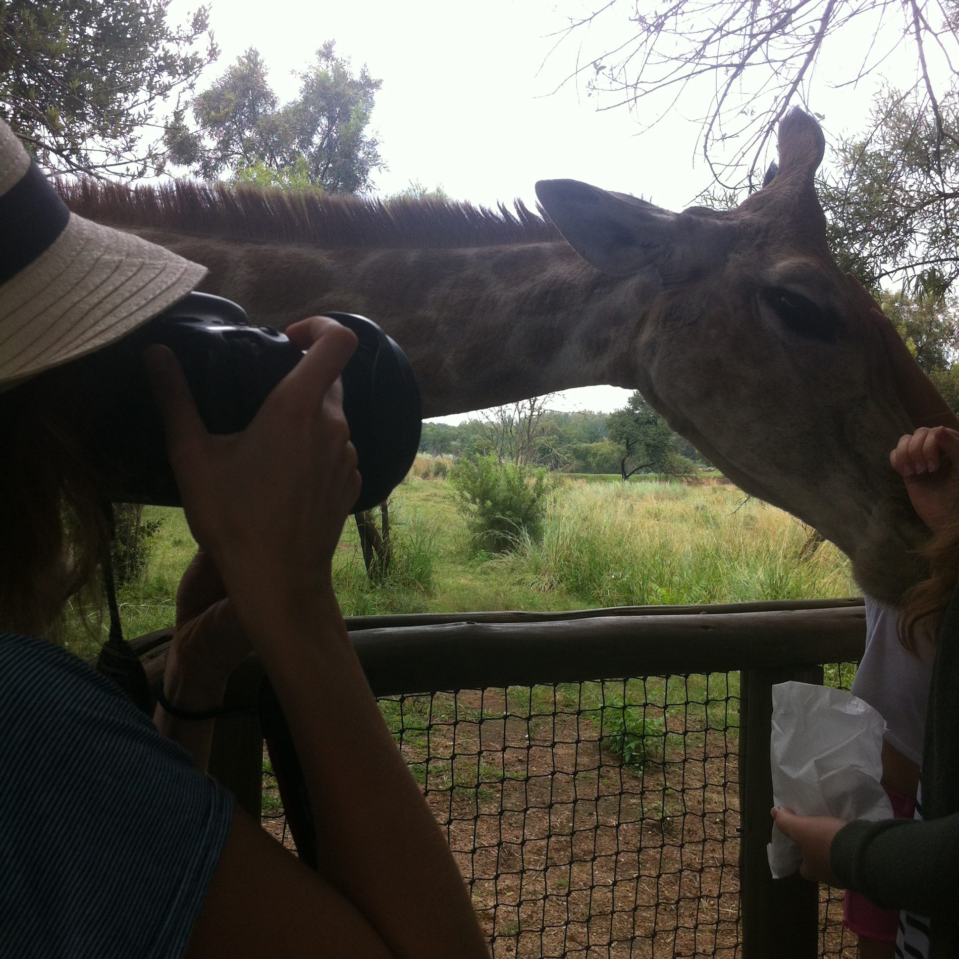 South Africa: Lion & Safari Park